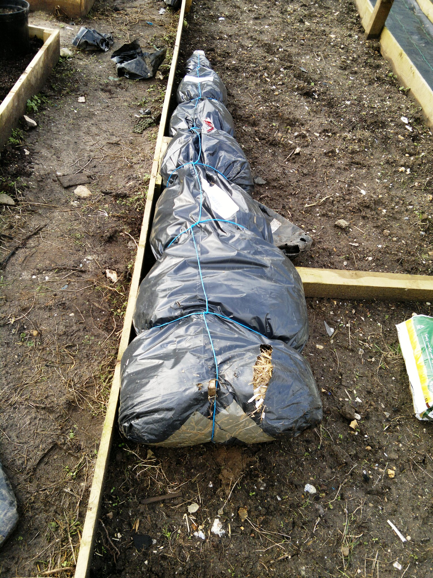 A parcel of bareroot trees ready for planting around the borders