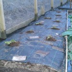 Perennial border with rhubarb planted through weed suppressing membrane