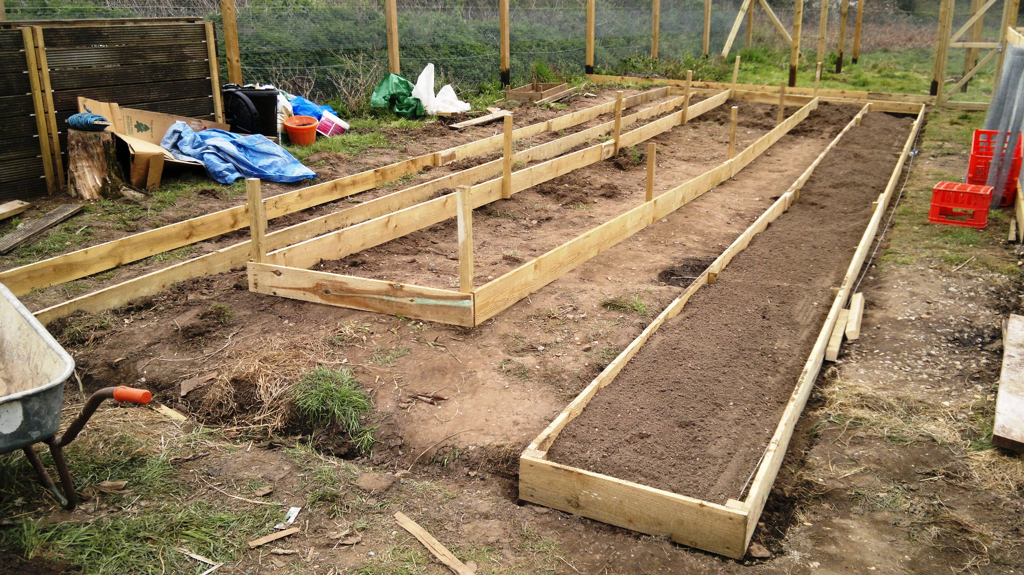 Polytunnel beds laid out