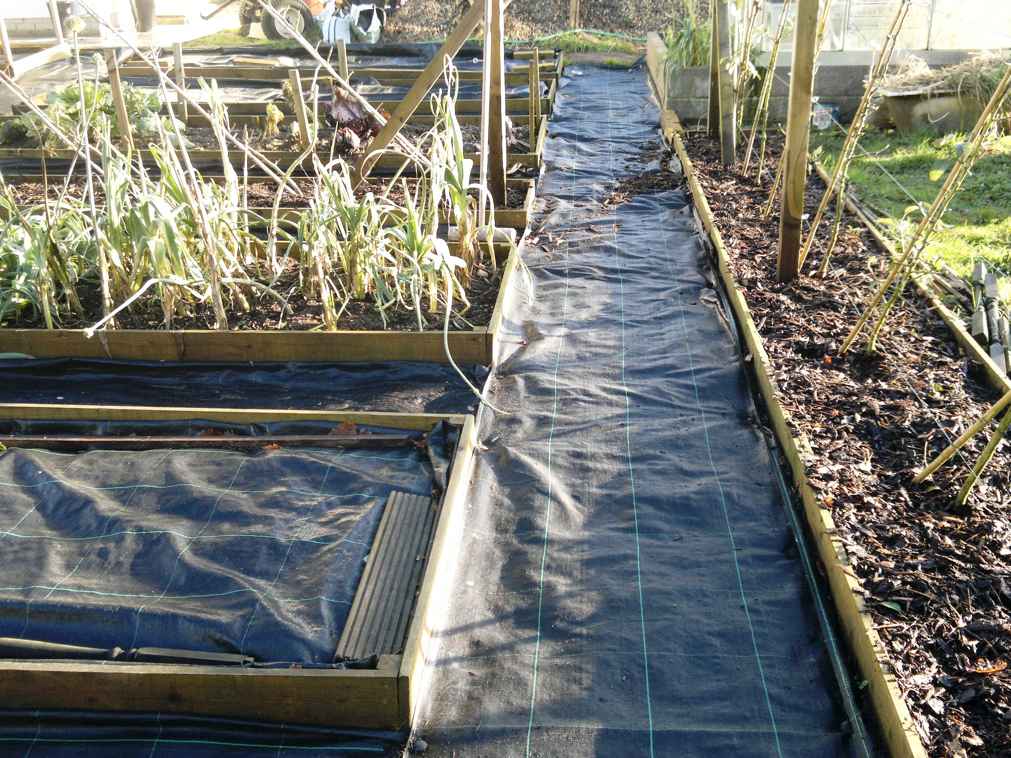 Weed suppressing membrane laid between beds