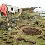 Clearing a few small trees from the plot