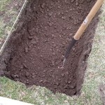 Trenching part 4: loose subsoil, most of the large stones removed