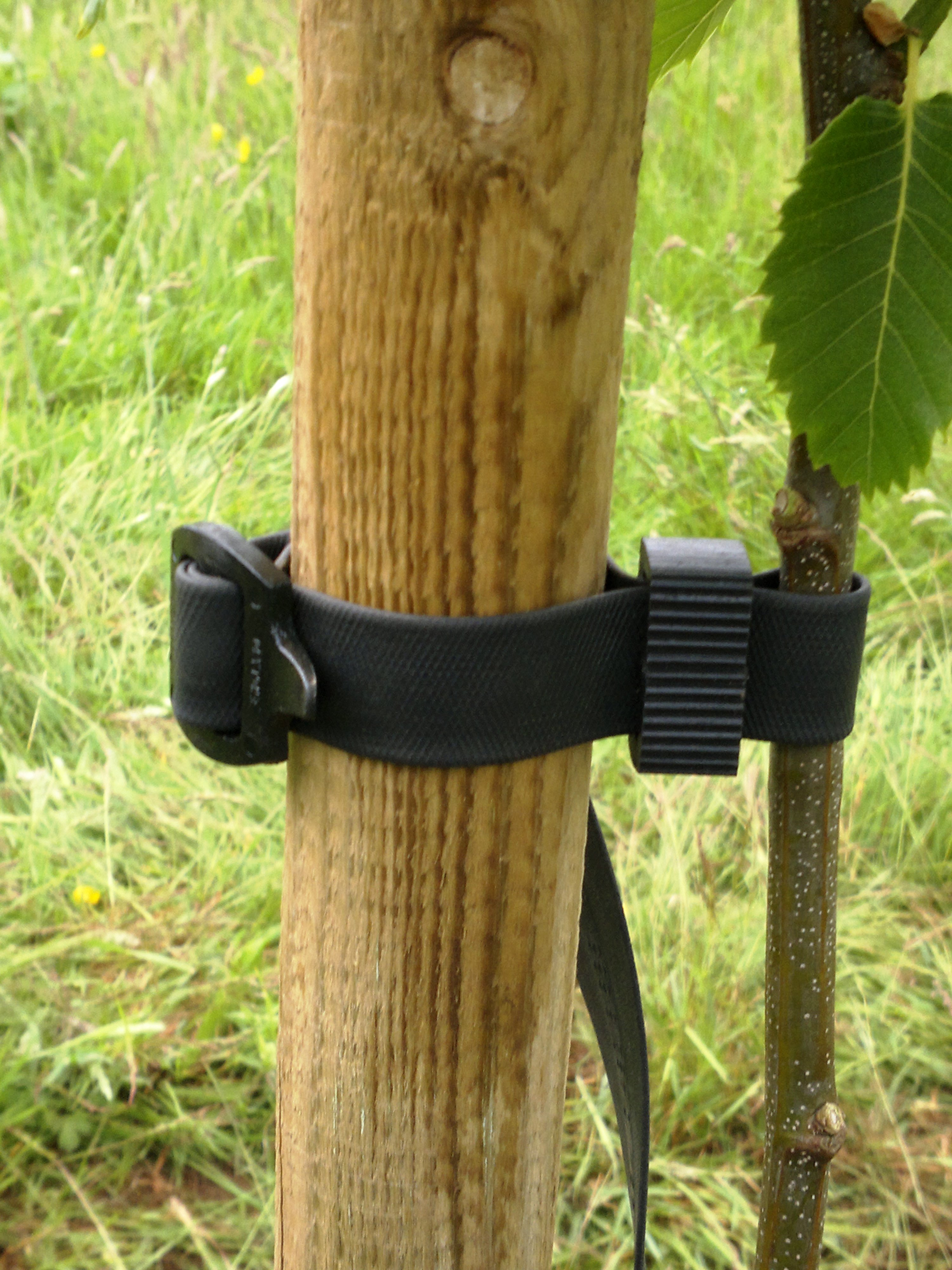 Tree buckle fastens securely the young tree to the stake