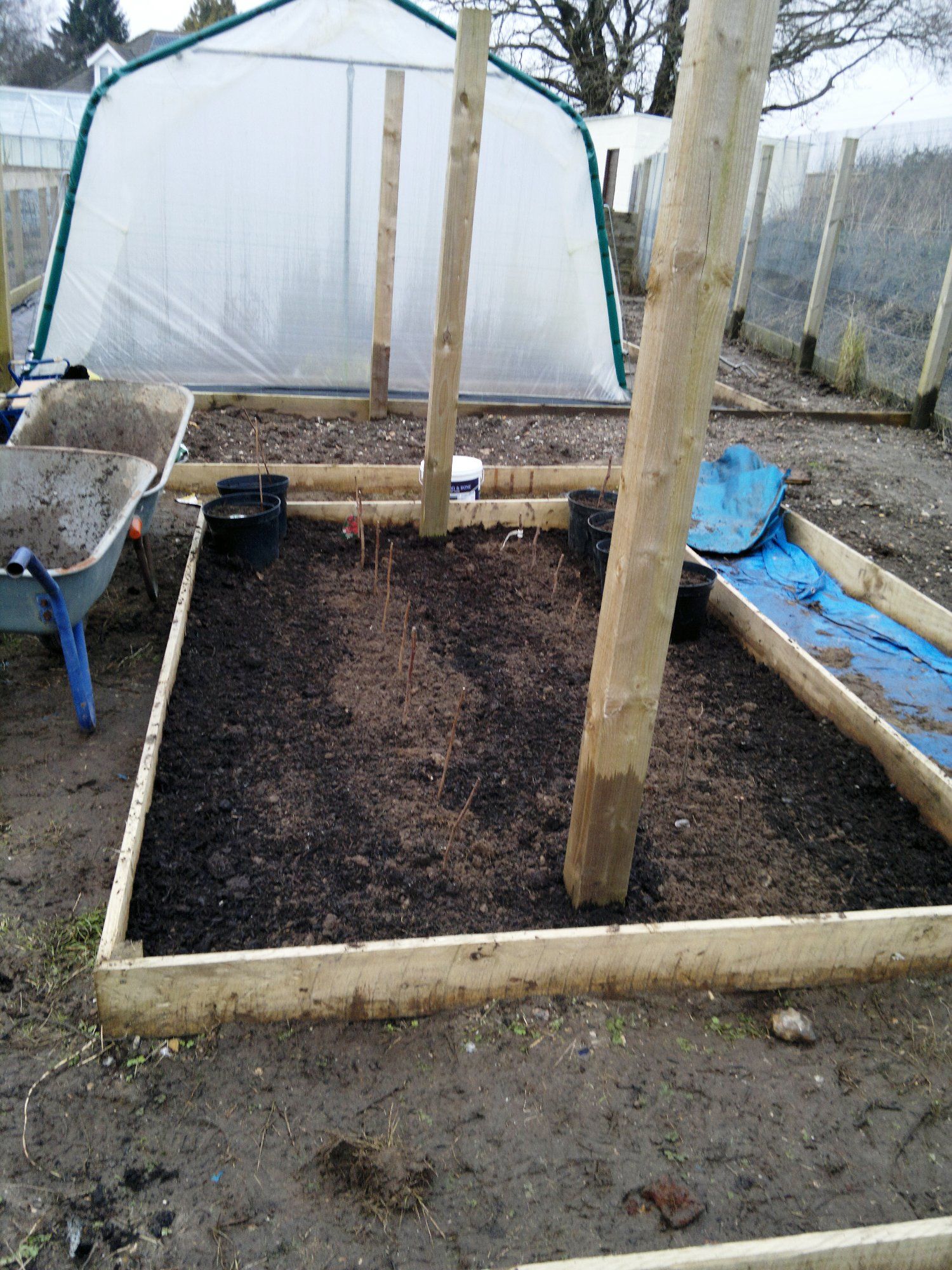 First raspberry bed prepared and planted