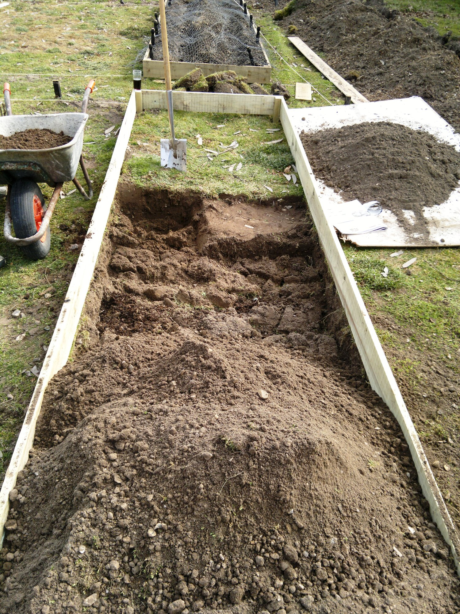 Halfway through the second bed, the first, planted with potatoes, is just visible in the background