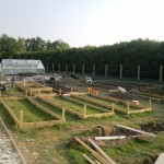 Halfway through the main beds, with six more frames ready for digging