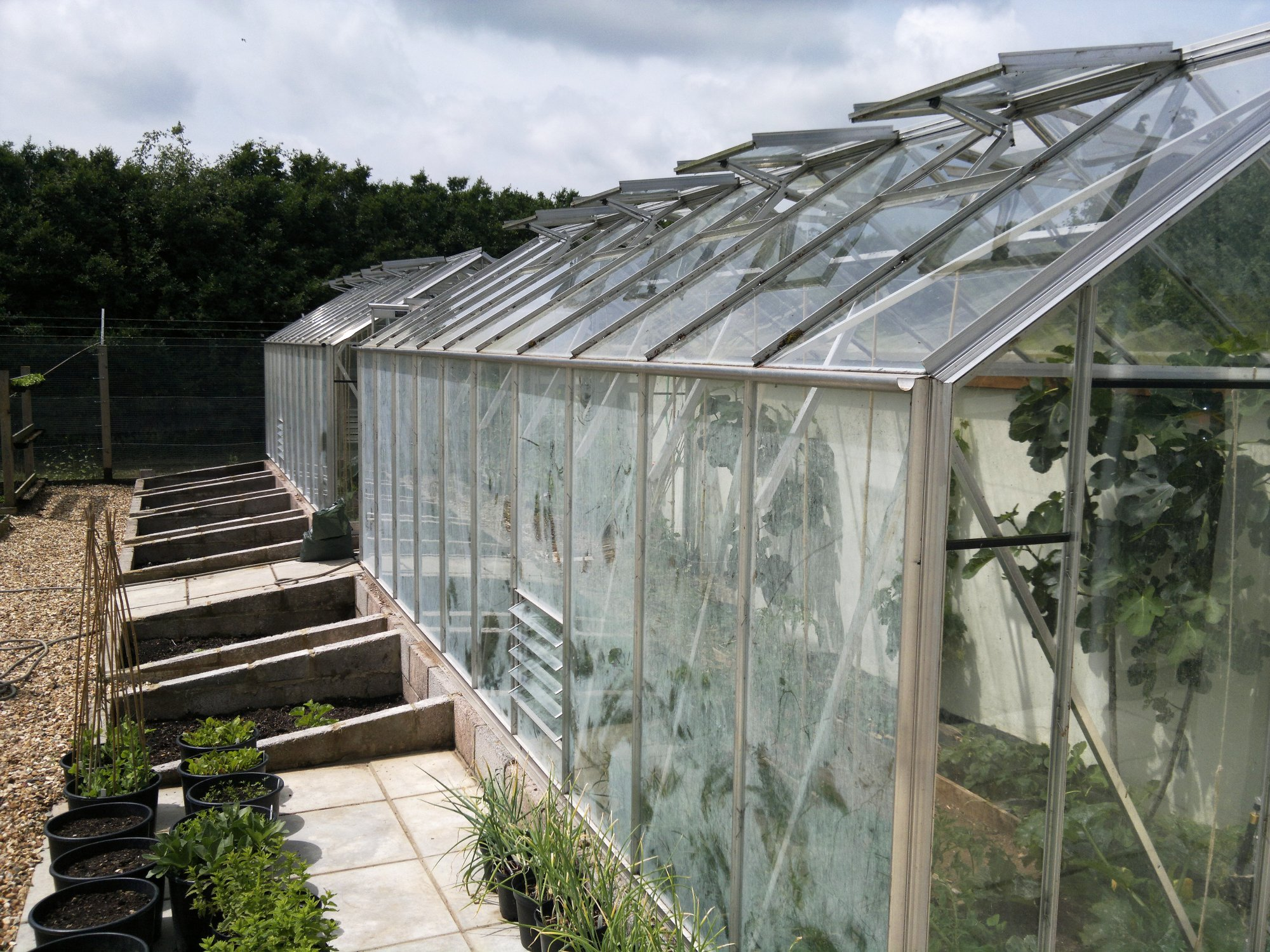 Glasshouses and coldframes; lights for the frames still need to be built