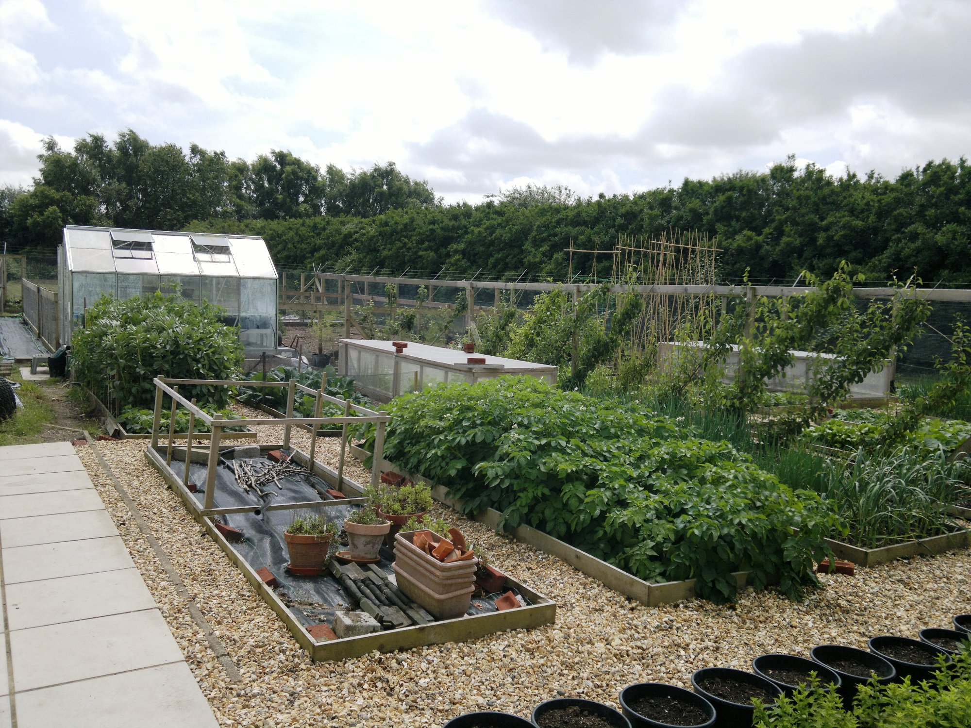 Main vegetable beds