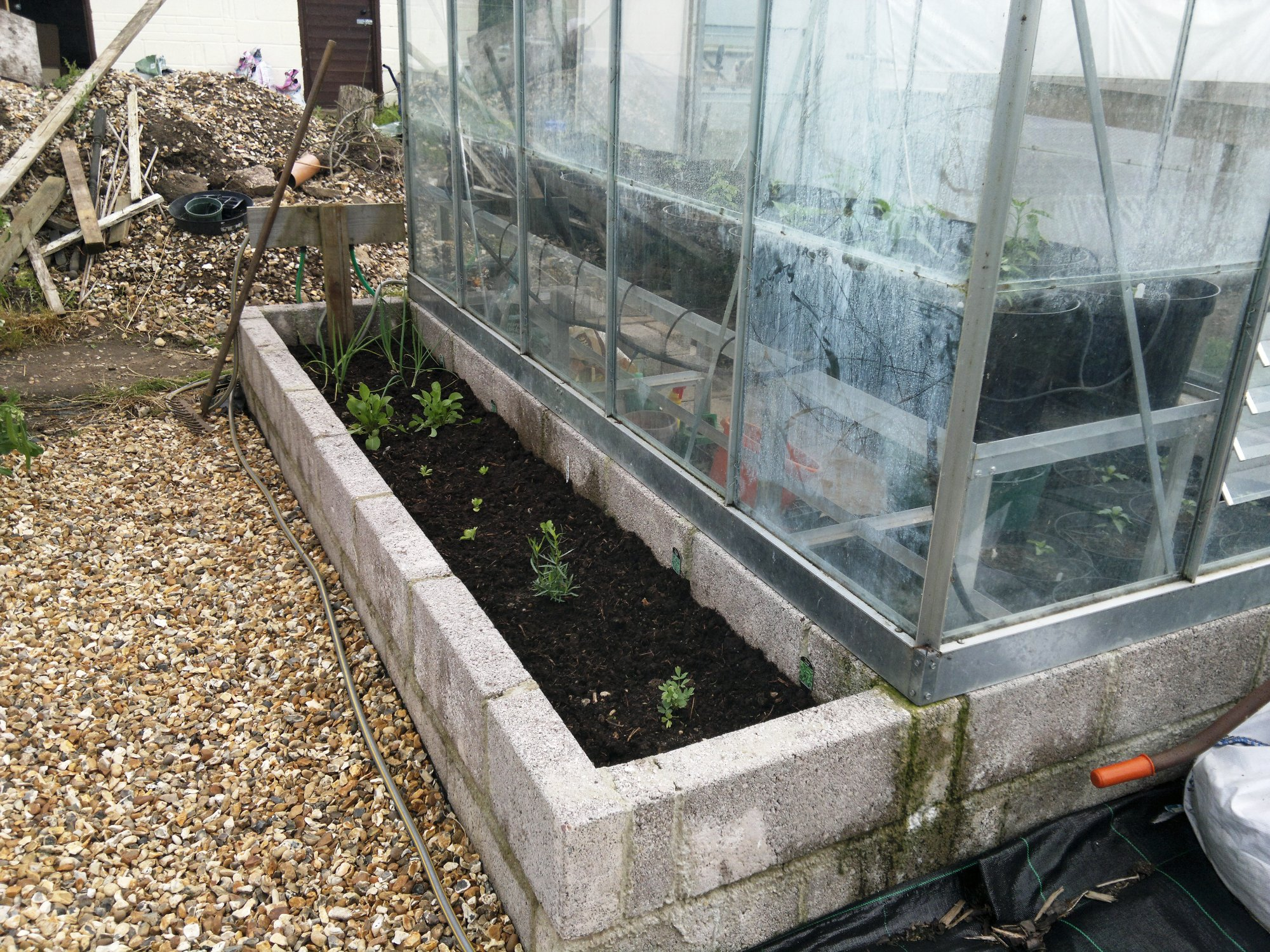 Small raised bed alongside 'chilli house', with some new perennial planting