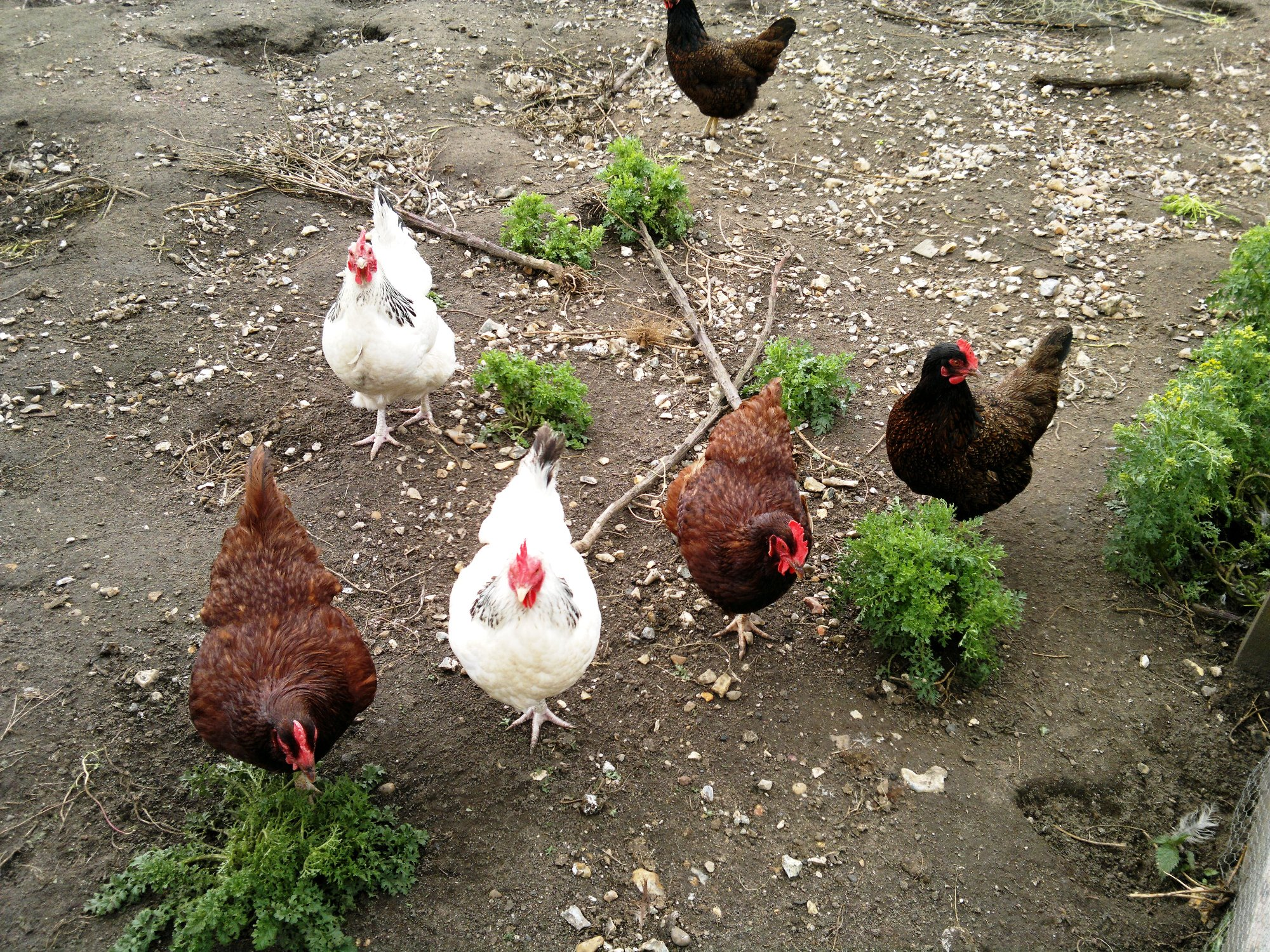 Some of our girls