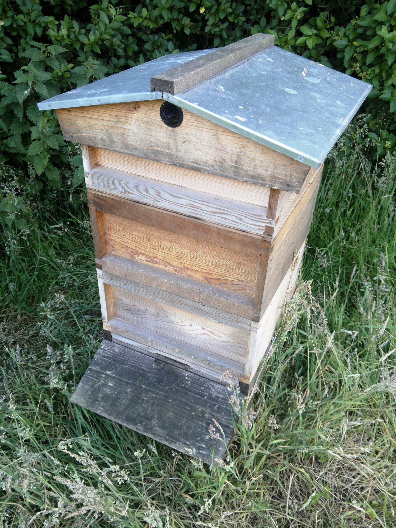Hive occupied once again with a new colony of bees