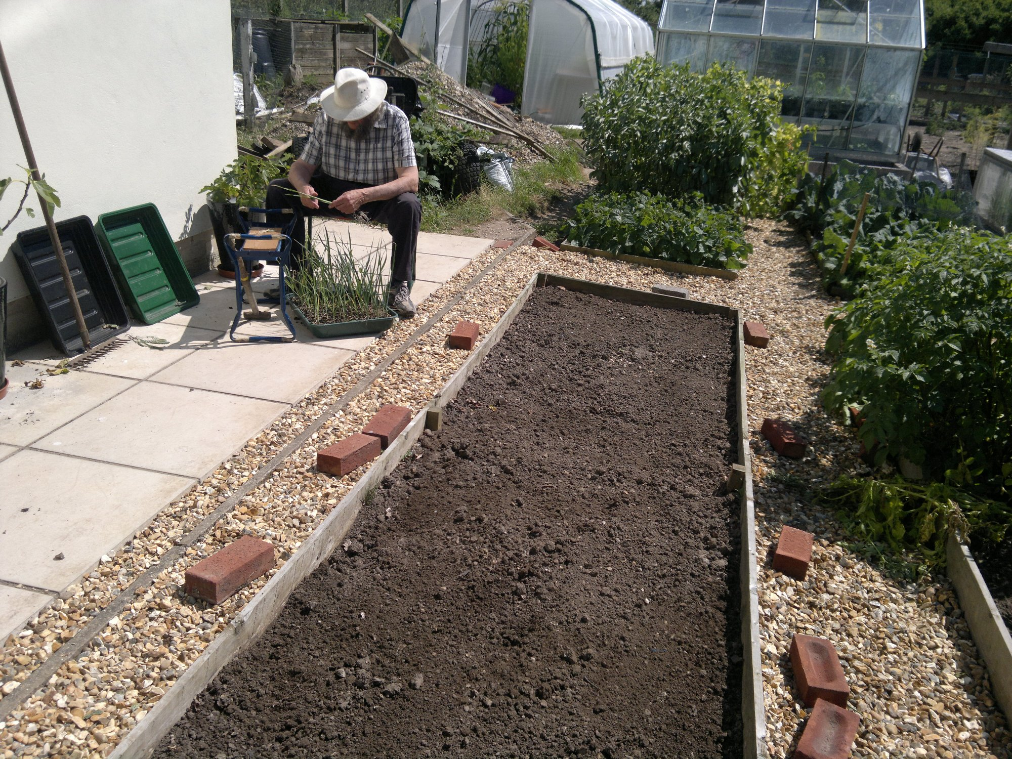 Dad separating the leek plants; prepared bed in the foreground