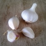 The large, juicy cloves of Thermidrome compared with a bulb of garlic from the supermarket
