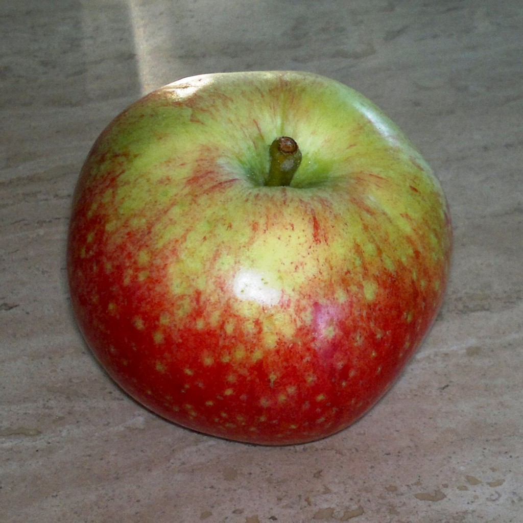 'Beauty of Bath' apple