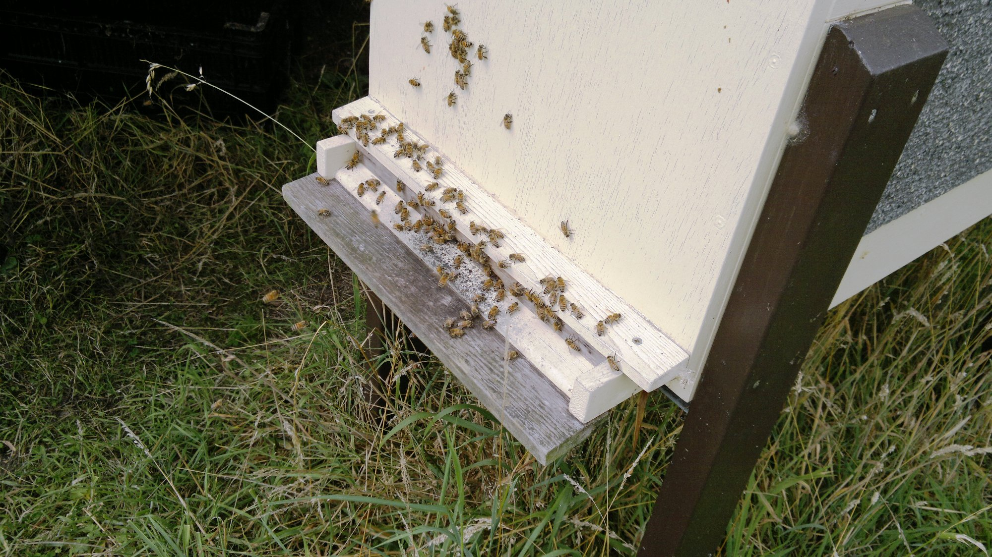 Busy bees bringing nectar into the long deep hive