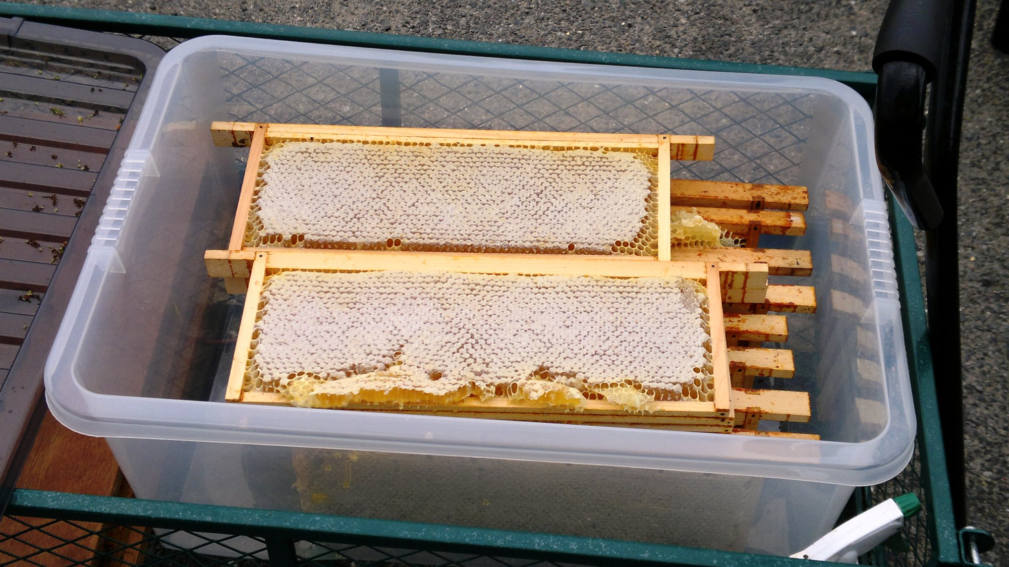 Ten frames of delicious, rich, and floral honey