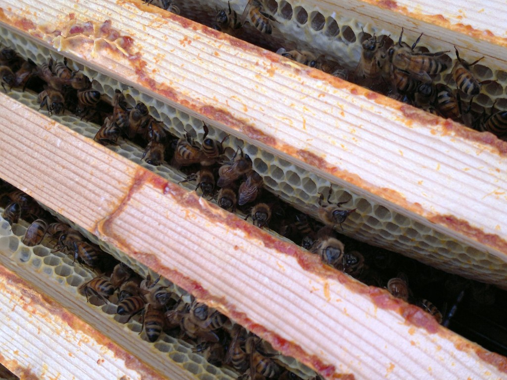 Bees finishing a few super frames in the long deep hive