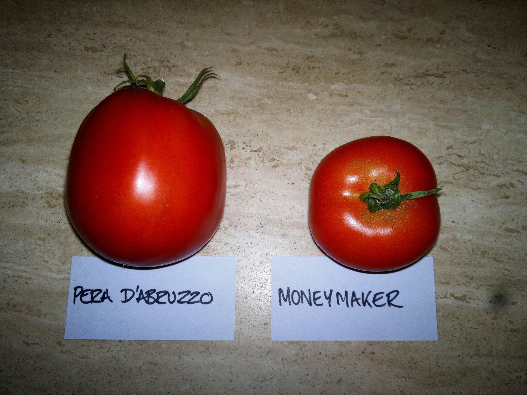 The two late ripening tomatoes