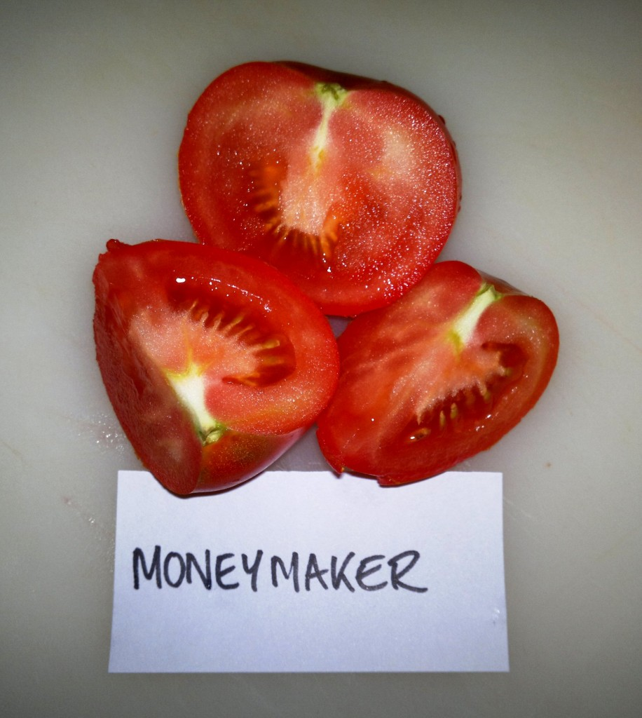 Traditional English tomato Moneymaker
