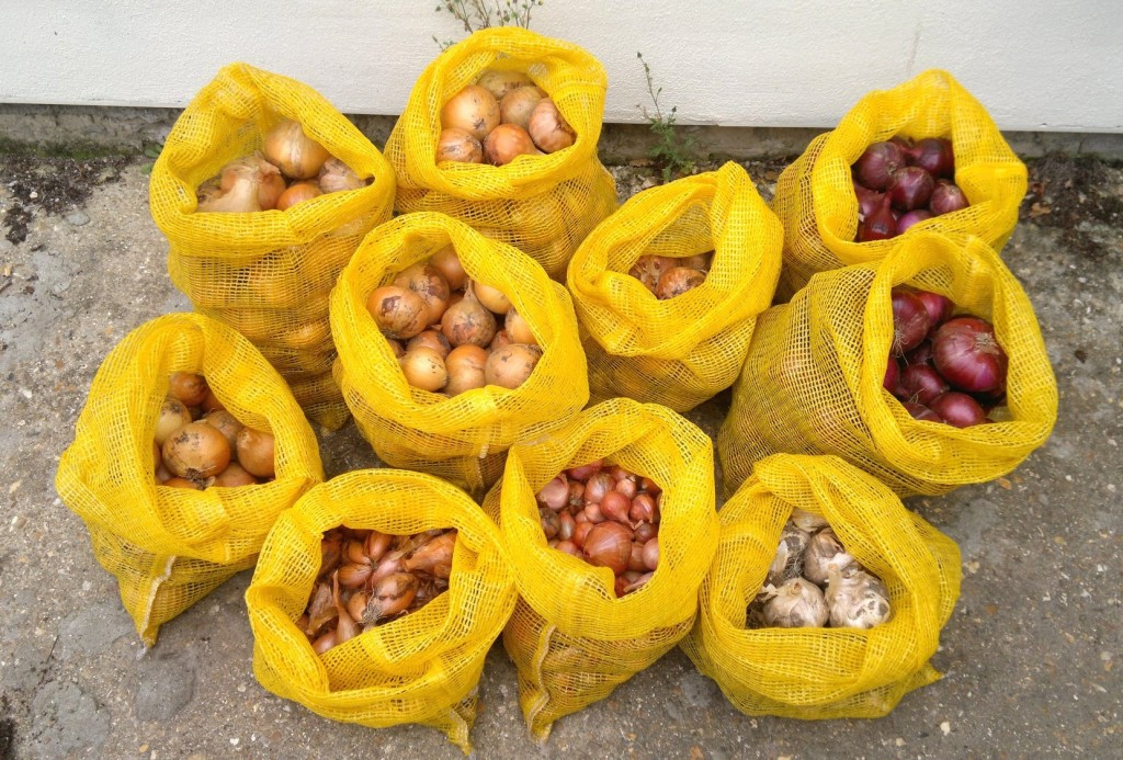 Onions, garlic, and shallots ready for storage