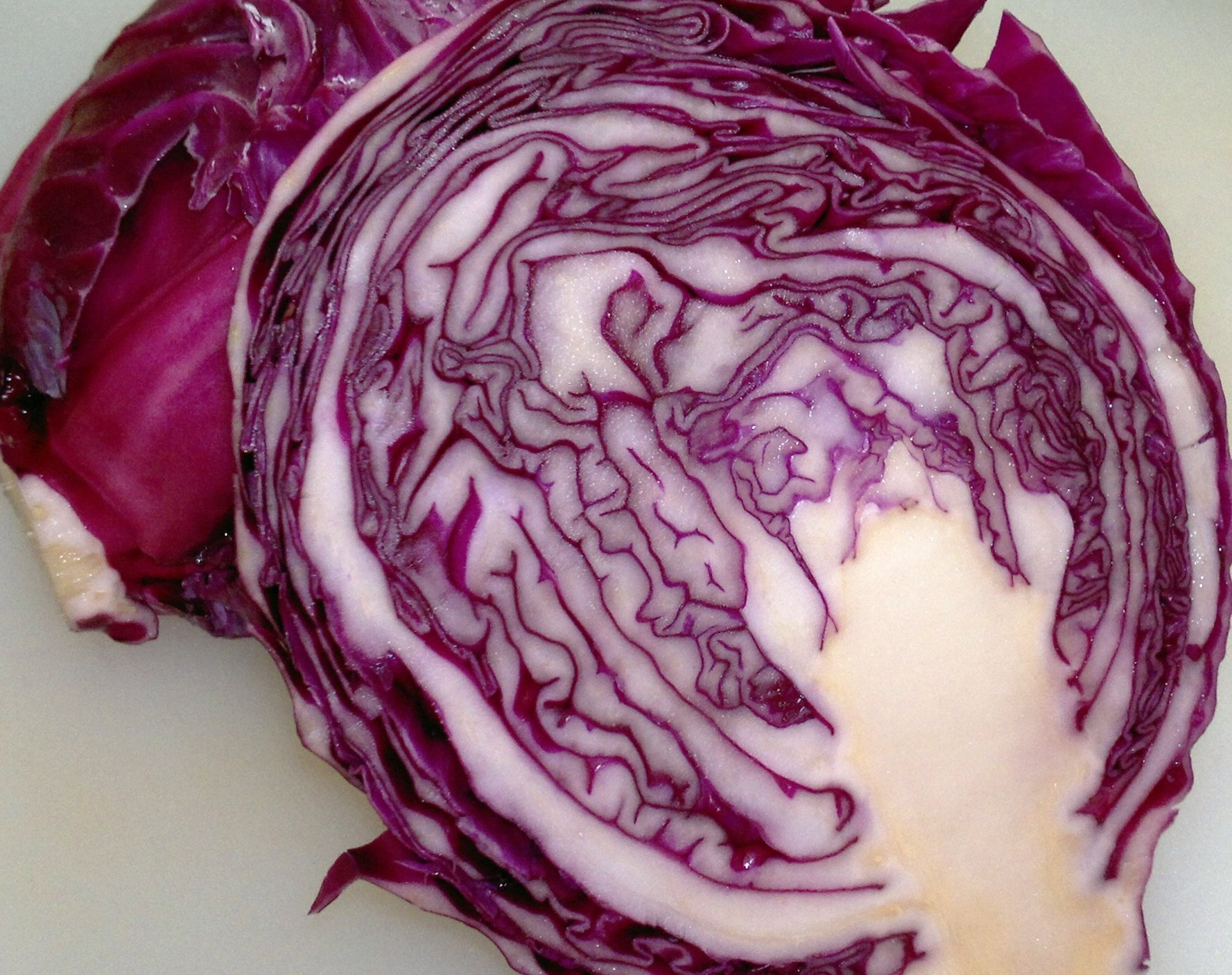 Traditional red cabbage variety Red Drumhead