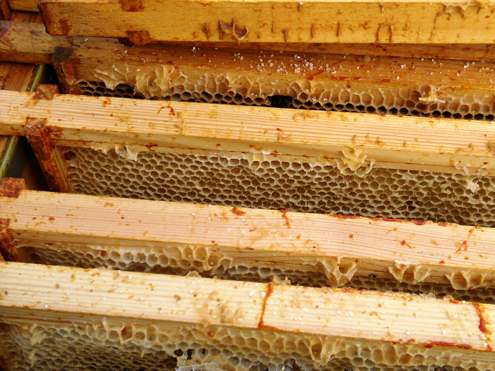 Frame after frame stripped of honey, and no bees in sight