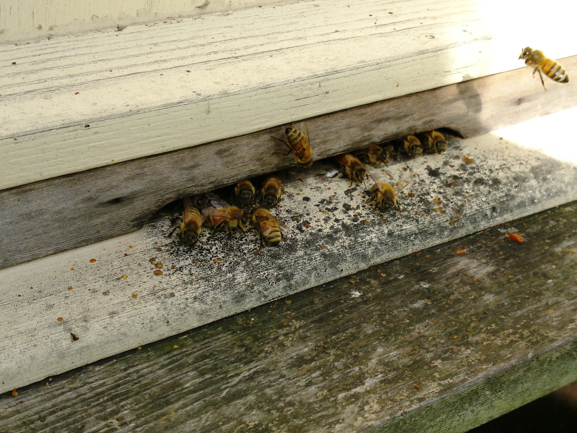 Girls still busy in the long deep hive