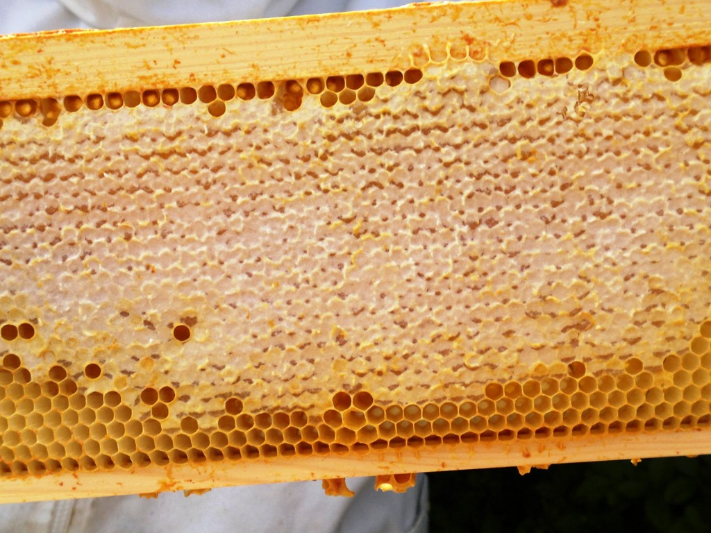 The last of the honey crop