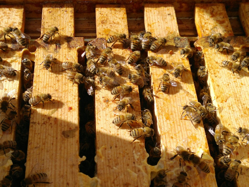 The long deep hive is still packed full of bees and frames of honey