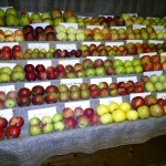 Extensive displays of apple varieties