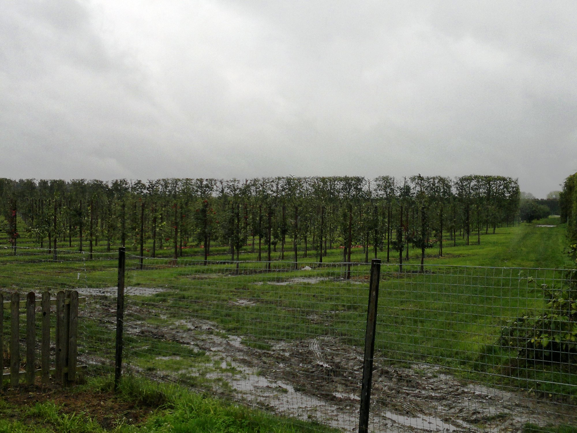 The orchard was not a tempting prospect on this rainy day