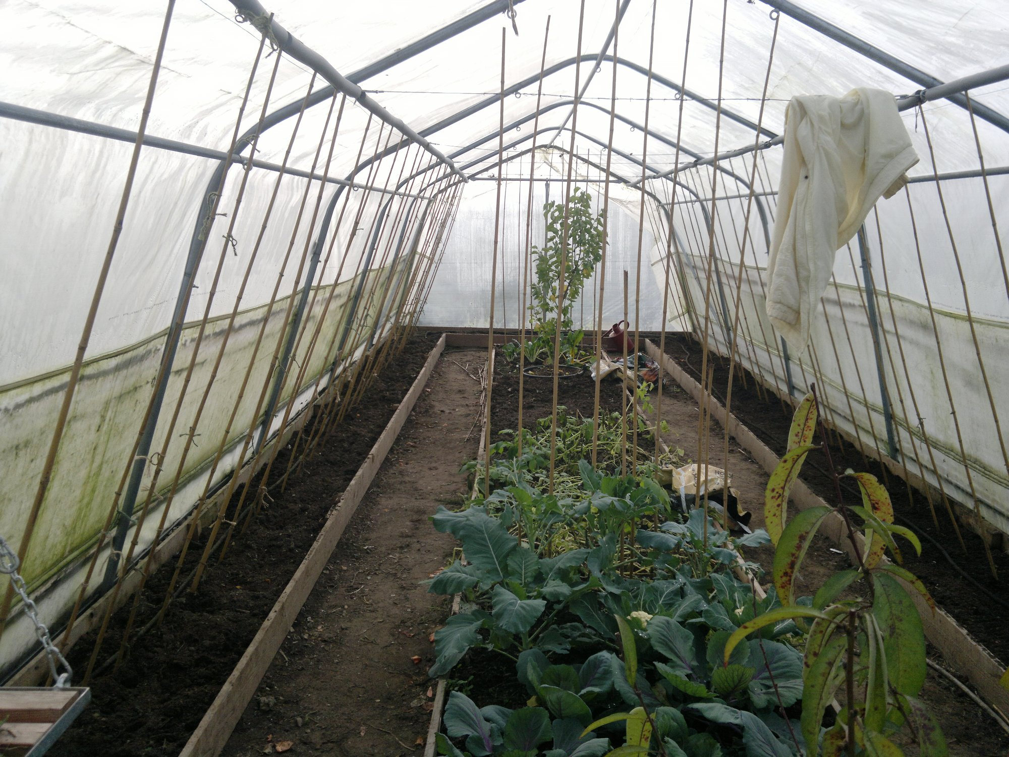 Polytunnel cleared of autumn crops and ready for overwintering