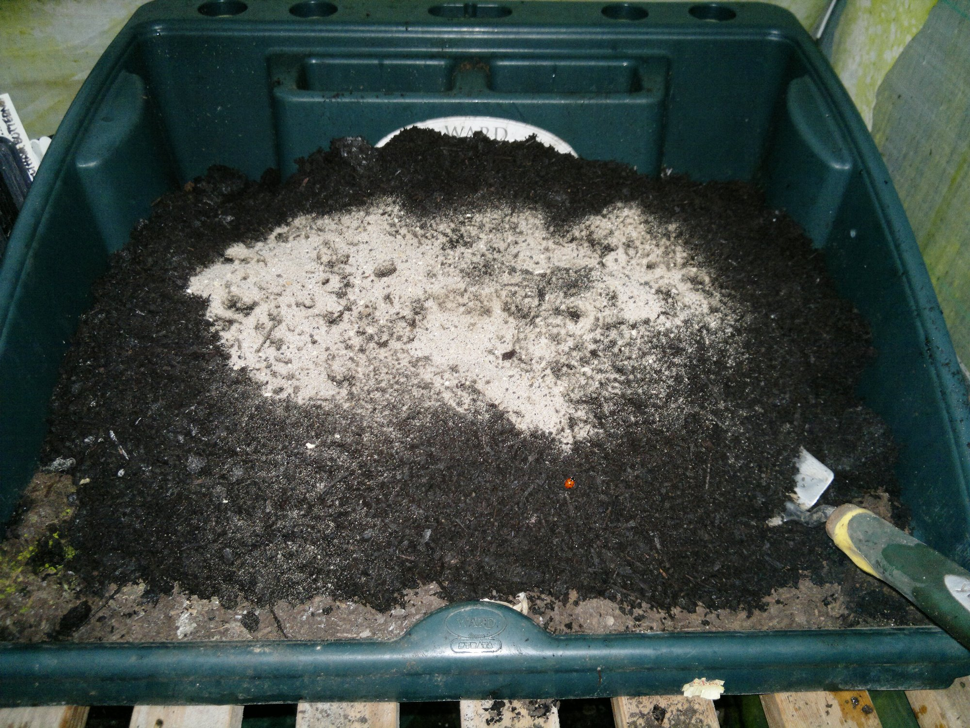 A handful of fish, blood, and bone is added to the multiputpose compost