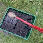Pots should be watered before sowing so as not to wash the seeds further down into the compost