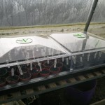 Propagator filled with peppers, chillies, and aubergines