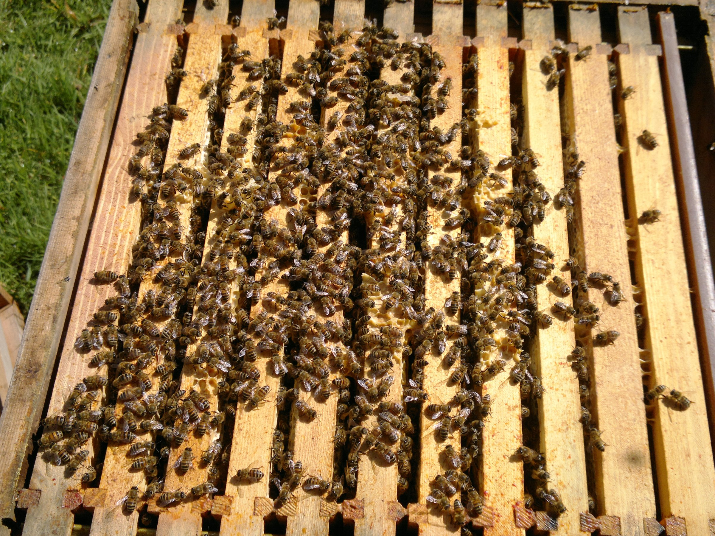 Lots of bees in the top brood box - a good sign