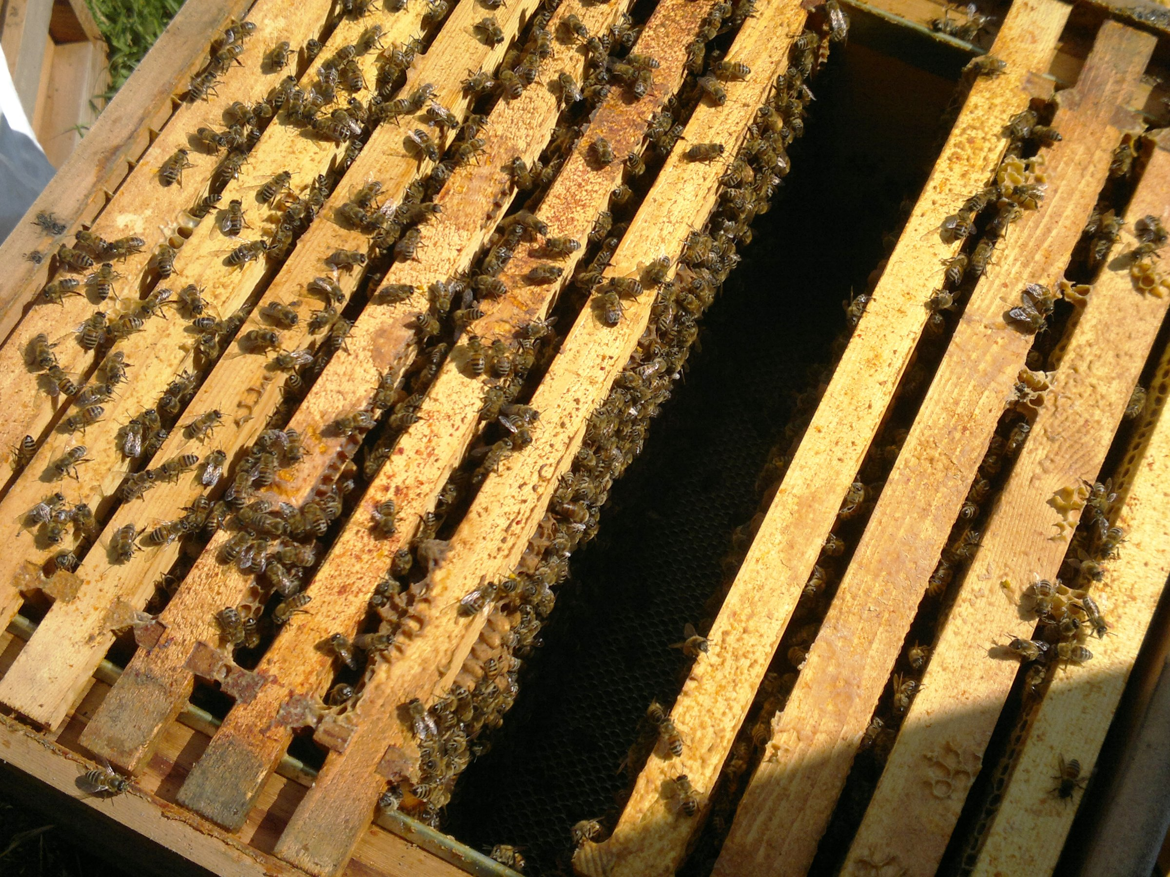 The second brood box is also packed with bees
