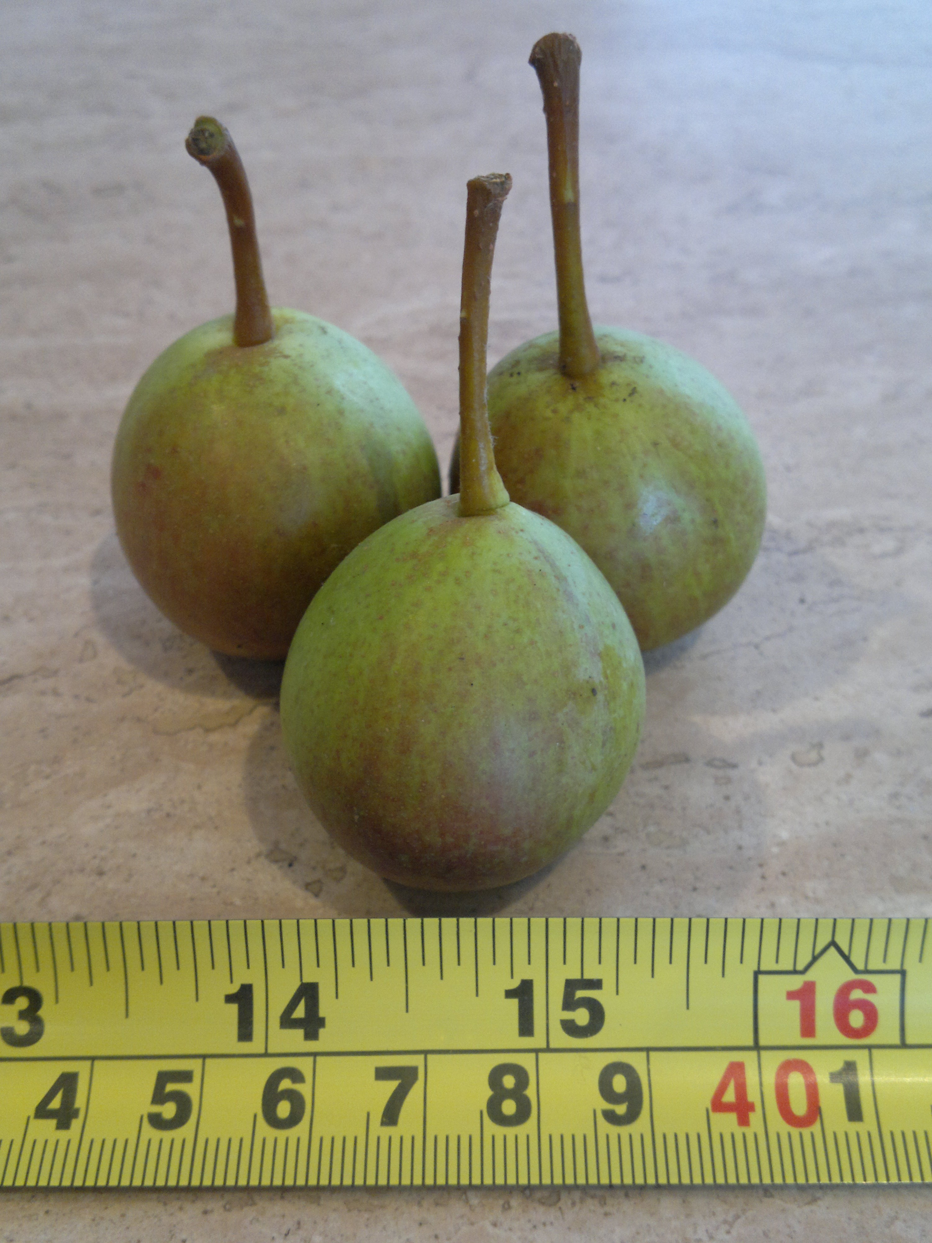 The small fruits of early pear Doyenne d'Ete