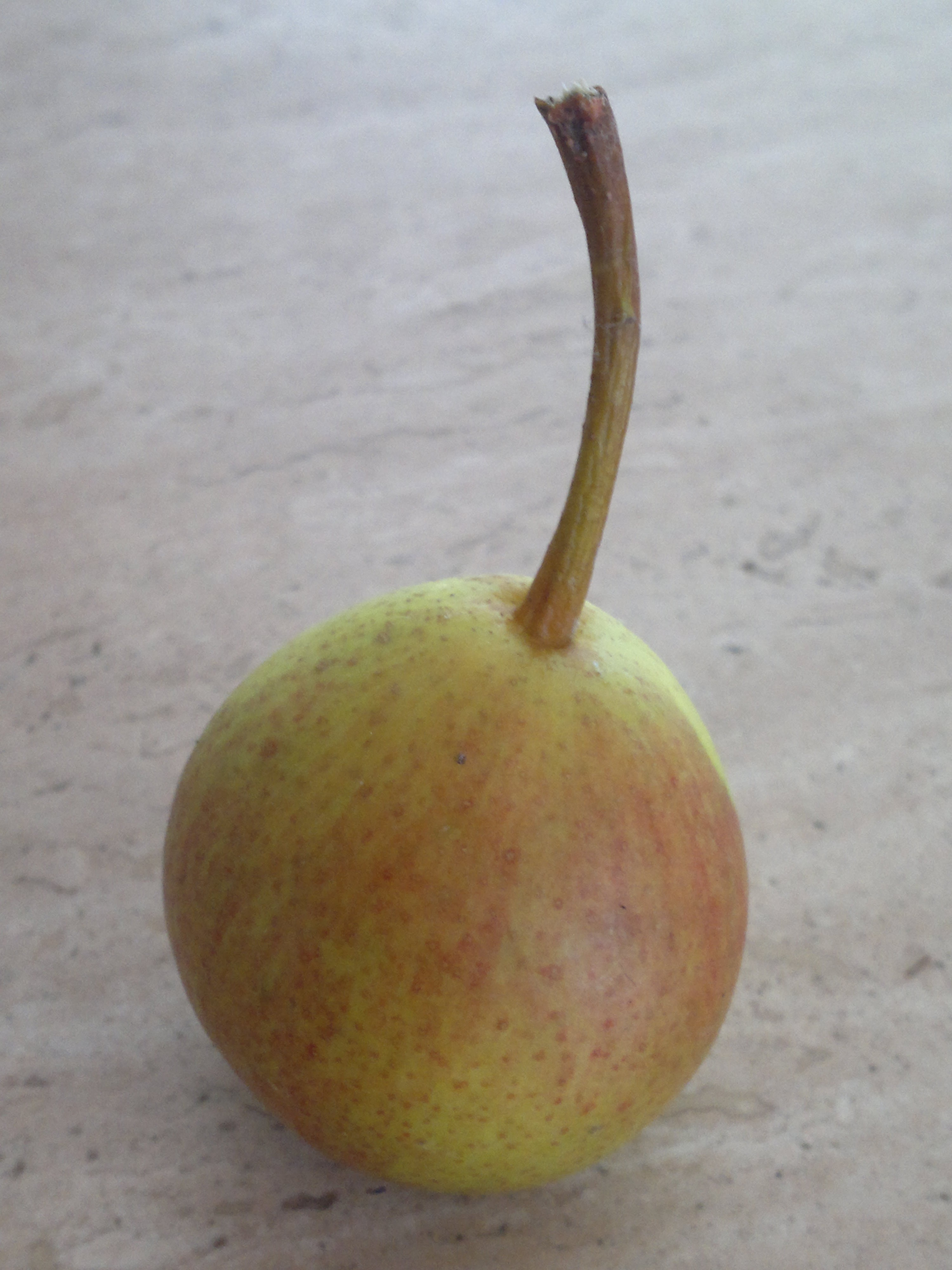 Doyenne d'Ete, ripe and ready to eat in July