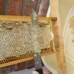 Removing the cappings from the sealed honey