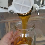 Filling the honey jars