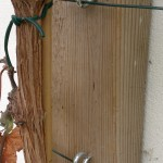 Vine eyes are ideal for supporting training wires