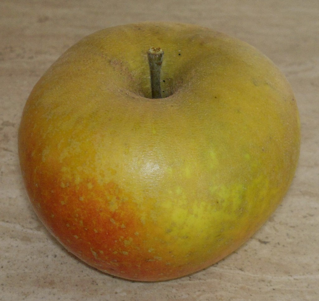 St Edmund's Pippin; a fine early-mid season dessert apple