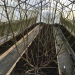 Polytunnel cleared and ready to grow