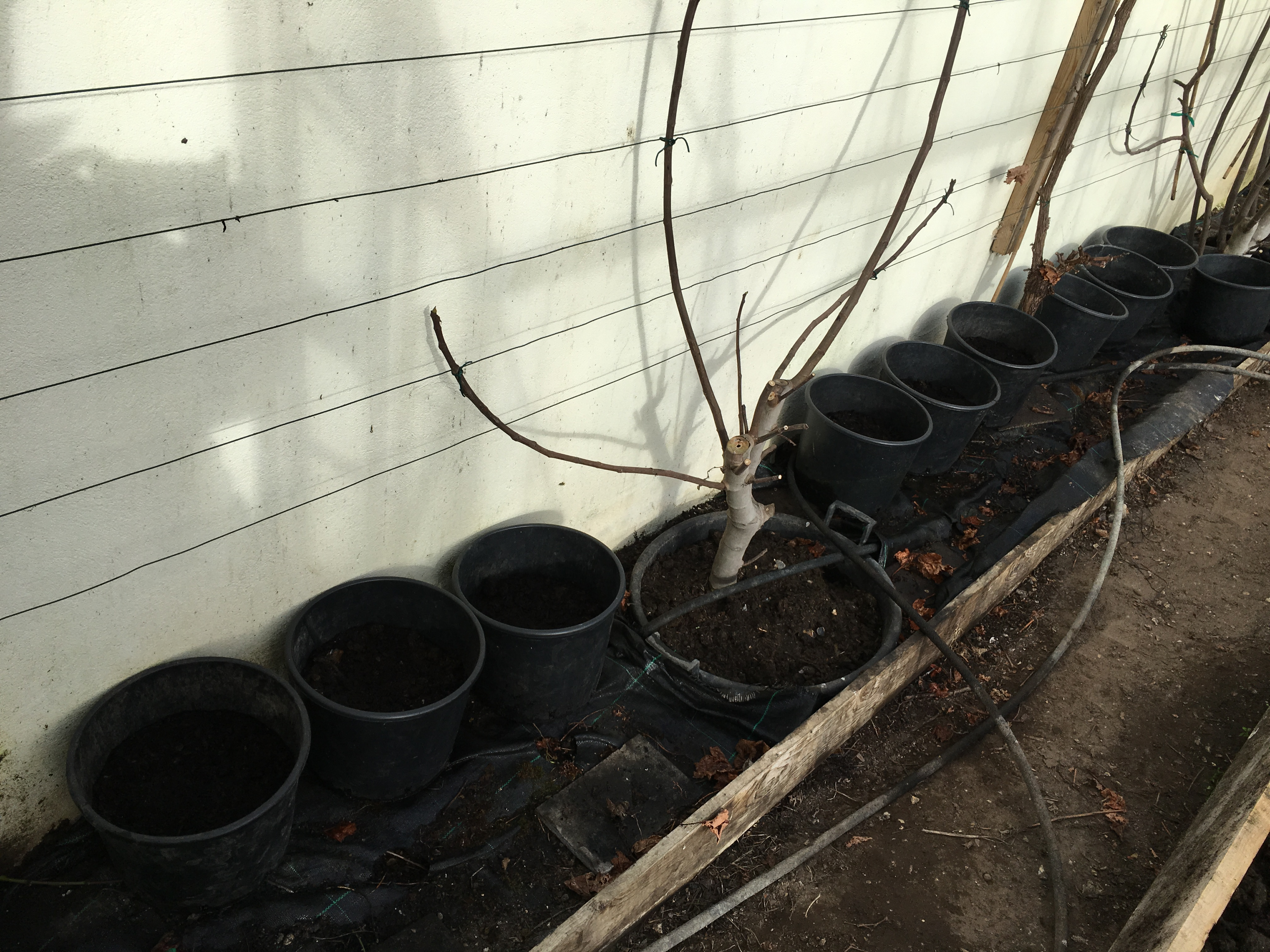 Pots lined up along the wall to take advantage of the warmth