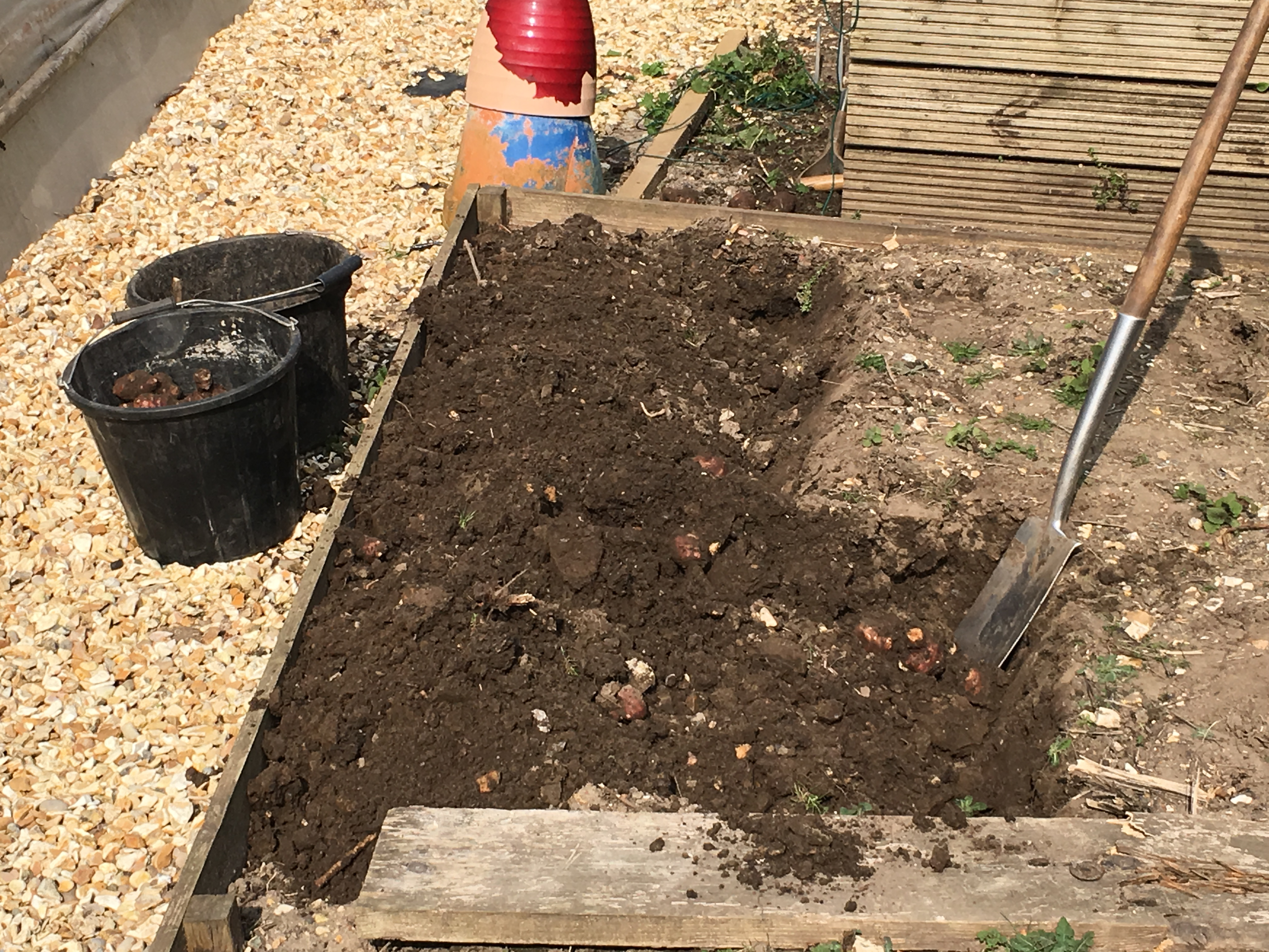 Digging over the bed to unearth any remaining tubers