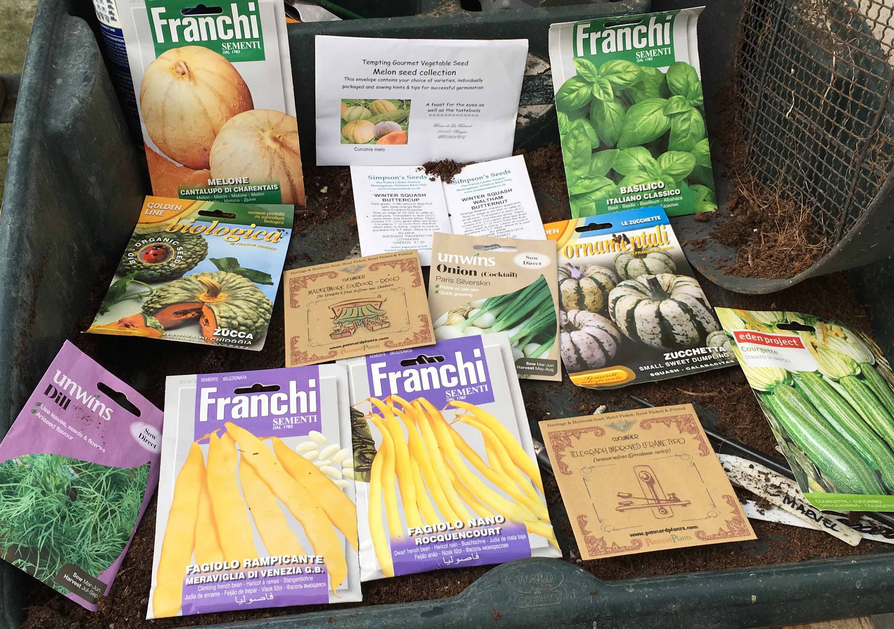 Sowing this week - tender crops (except the dill)