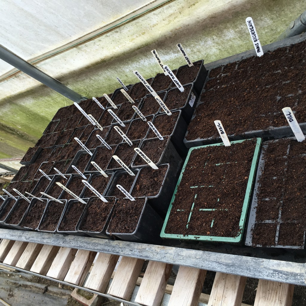 Another of our heated propagators filled with seed
