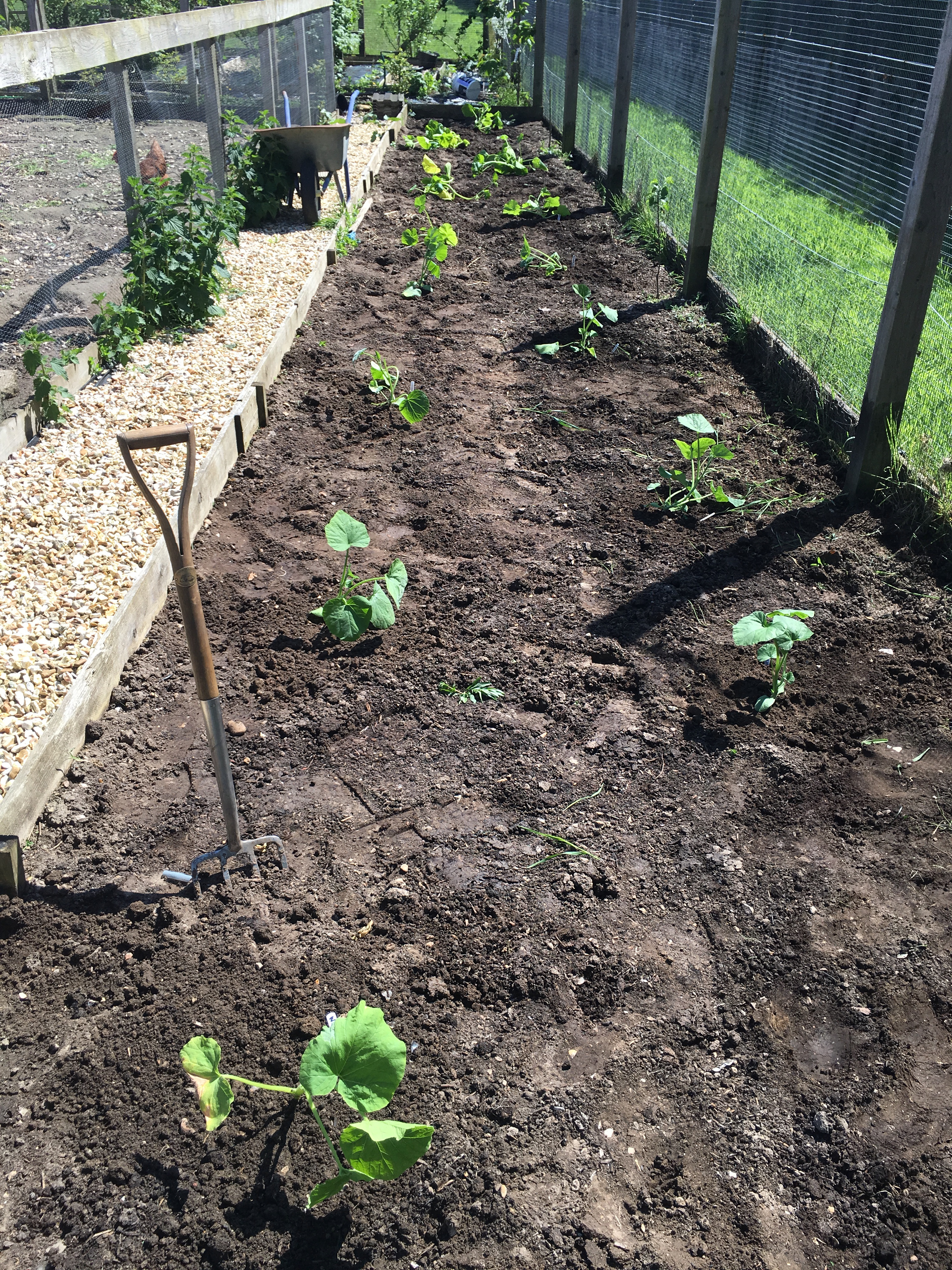 The planted squash bed