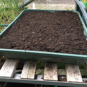 Larger seed tray filled with moist compost